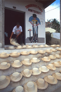 Montecristi Panama hats drying in sun