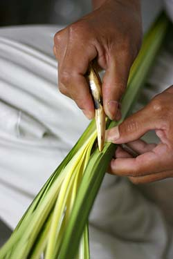 Simon uses the tip of a deer antler to pierce the leaf shoots of a cogollo as part of his process to make straw.